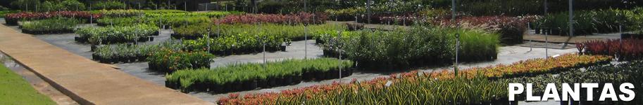 banner_plantas